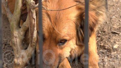 Photo of Կորոնավիրուսը կենդանիներից չի փոխանցվում. կենդանաբանական այգու տնօրեն