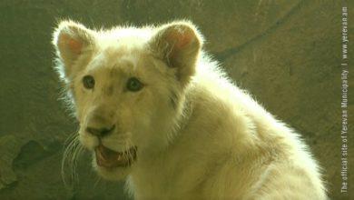 Photo of В Ереванском зоопарке новосел