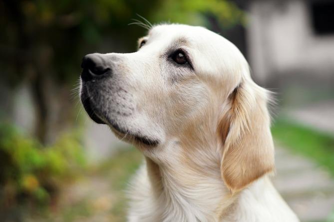 Photo of Вот это верность! Собака в Ухане три месяца ждала у больницы своего больного коронавиусом хозяина