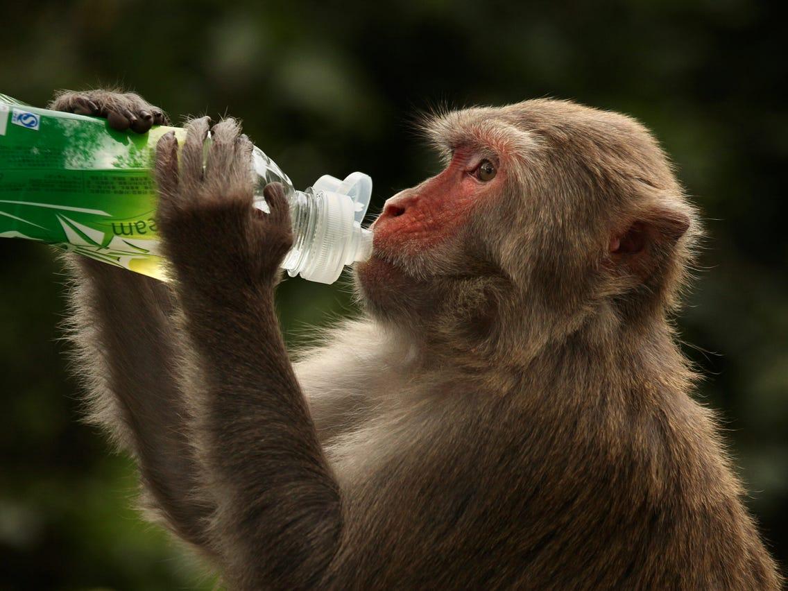 Photo of Թաիլանդում կապիկներին ներարկում են կորոնավիրուսի դեմ փորձնական պատվաստանյութեր
