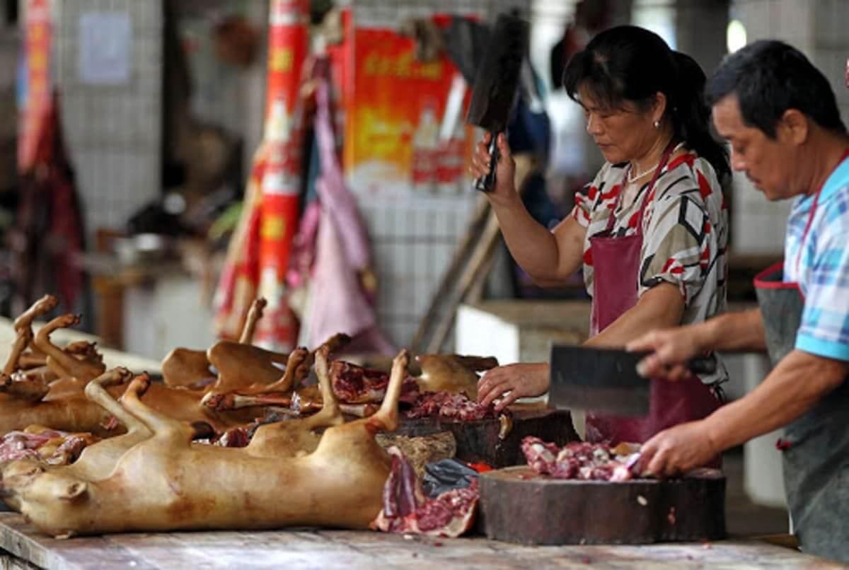 Photo of Провинция Ухань ввела запрет на употребление в пищу мяса диких животных