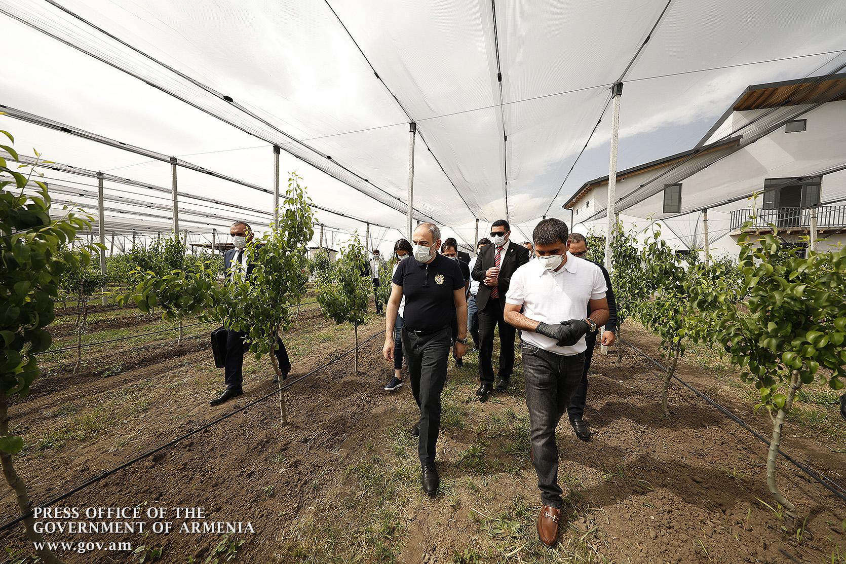 Photo of Վարչապետն Արարատի մարզում ծանոթացել է գյուղատնտեսական աշխատանքների ու ինտենսիվ այգիներ հիմնելու ծրագրերի ընթացքին