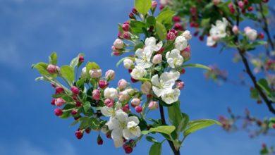 Photo of Весна набирает обороты: в Армении ожидается до 28 градусов тепла