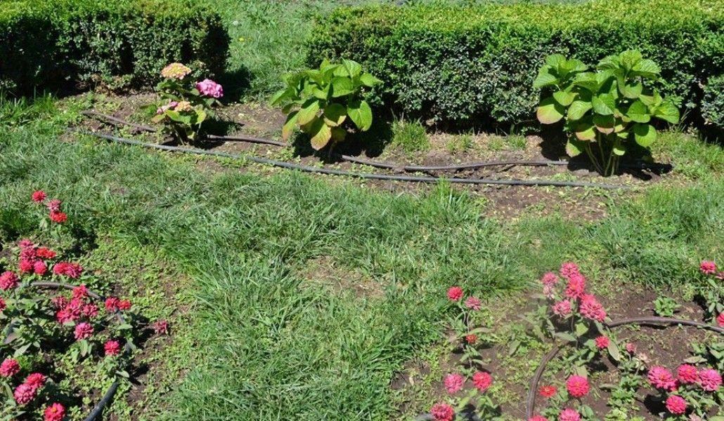 Photo of Էջմիածնում կոտրում են վարդագույն ծաղկող ակացիաները, գողանում ծաղիկները․ քաղաքապետարան