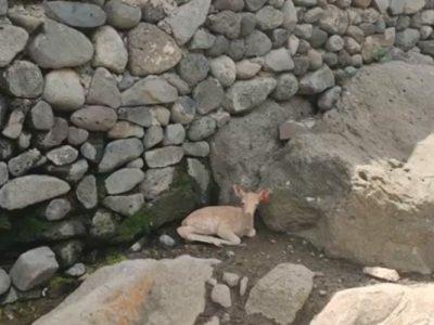 Photo of Երեւանի կենդանաբանական այգում ծնվել է Ալիսան