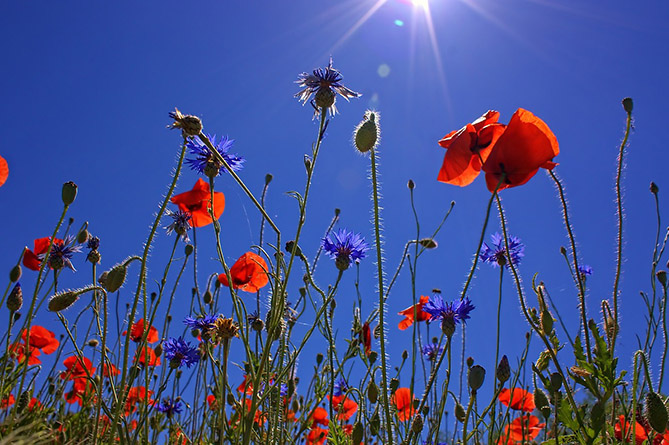 Photo of Հրաշք ամառ է մեր երկրում․ ո՛չ սառն է, ո՛չ շոգ, ո՛չ չոր է, ո՛չ խոնավ․ Գագիկ Սուրենյան