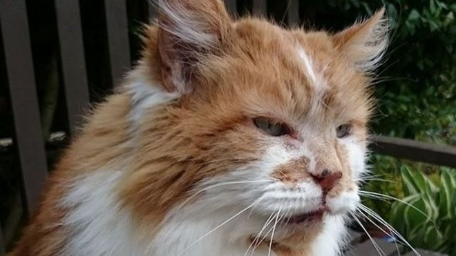 Photo of В Британии умер самый старый кот в мире. Раббл лишь немного не дожил до своего 32-летия