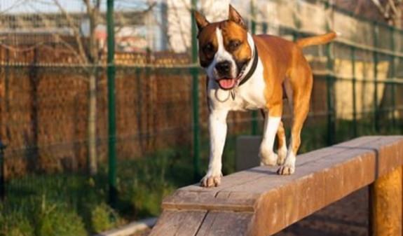 Photo of Խանդոտ շունը հոշոտել է նորածին երկվորյակներին
