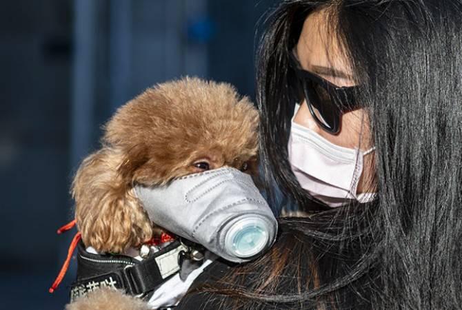 Photo of В Японии впервые обнаружили коронавирус у собаки