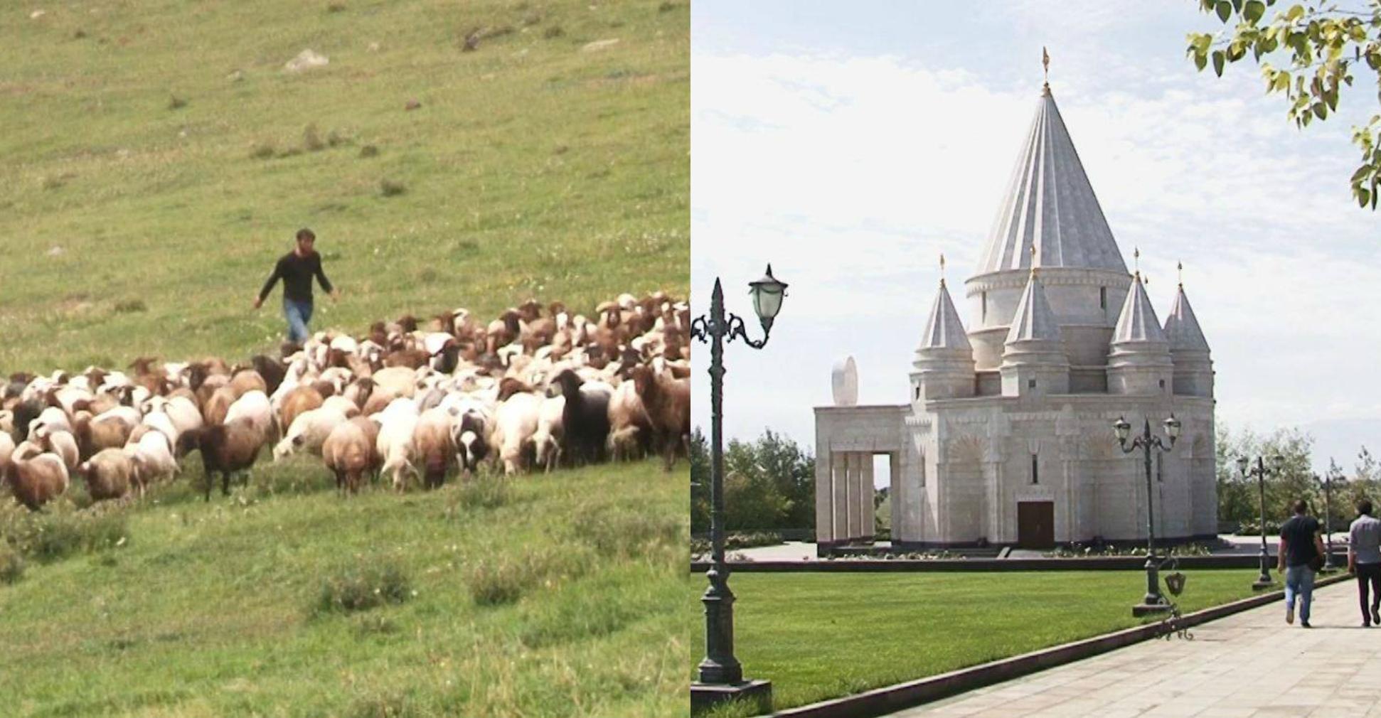 Photo of Овцы, горы, вечность и — Covid