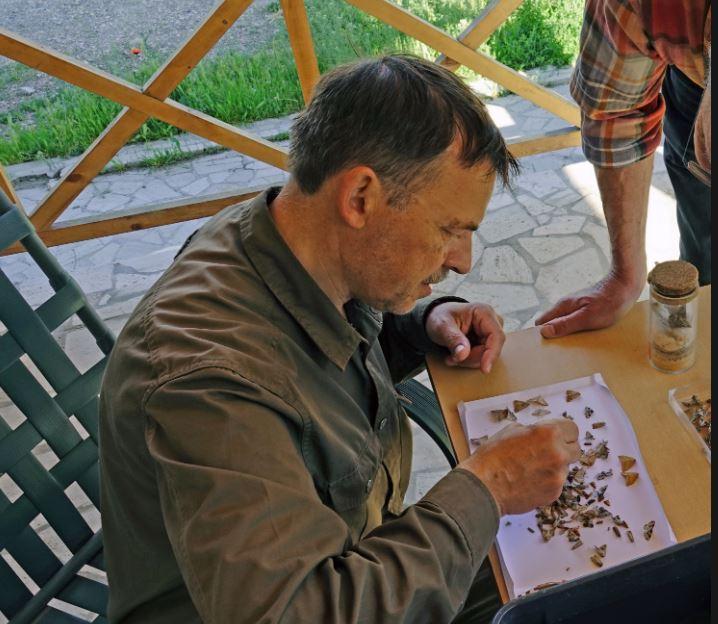 Photo of В Армении обнаружен неизвестный науке вид насекомых