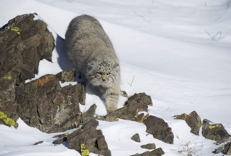 Photo of Один из редких хищников Армении, спустя 100 лет, вновь был замечен в республике