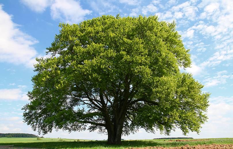 Photo of Արցախում 50 հազար ծառ կտնկվի «1 դոլար = 1 ծառ» բանաձևով