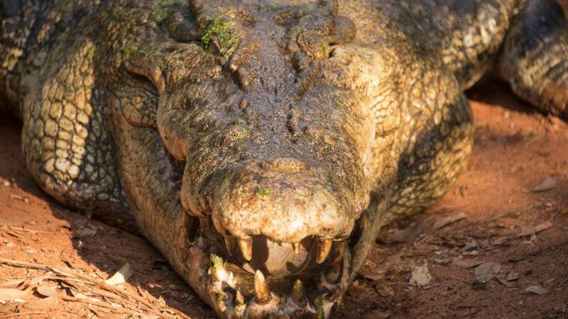 Photo of Австралиец вырвался из пасти крокодила, схватившего его за голову