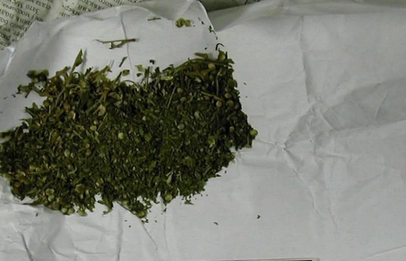 Photo of Շիրակի ոստիկաններն առանձնապես խոշոր չափի մարիխուանա են հայտնաբերել
