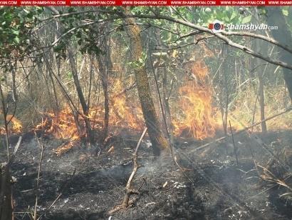 Photo of Արտակարգ դեպք Արարատի մարզում. մոտ 500 պտղատու ծառեր կրակի են մատնվել