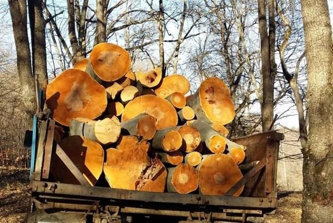Photo of Լոռու մարզում ապօրինի անտառահատումներն ավելացել են.  մարզի դատախազը դիմել է Ոստիկանություն