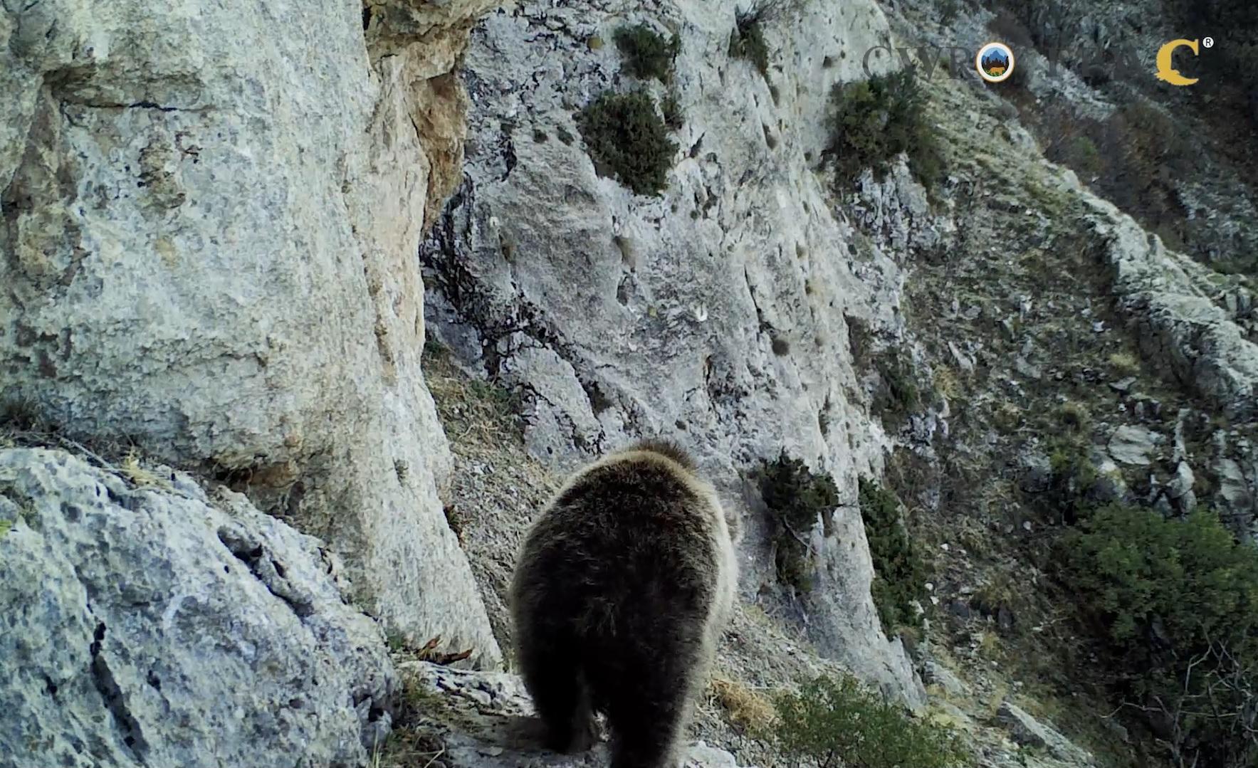 Photo of Ծուռթաթ քոթոթը վայրի բնության գրկում