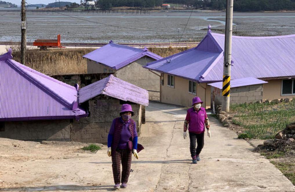 Photo of Զբոսաշրջիկներին գրավելու համար Հրվ. Կորեայի կղզիները ներկվել են մանուշակագույնով, և դա տվել է իր արդյունքը