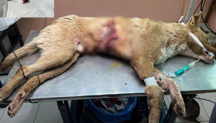 Photo of Զովունիում կրակել են քնած շան վրա. նոր ահազանգ