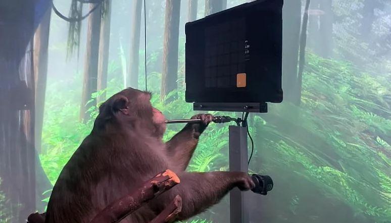 Photo of Взгляните на то, как эта обезьяна, которой компания Илона Маска имплантировала чип, играет в видеоигру