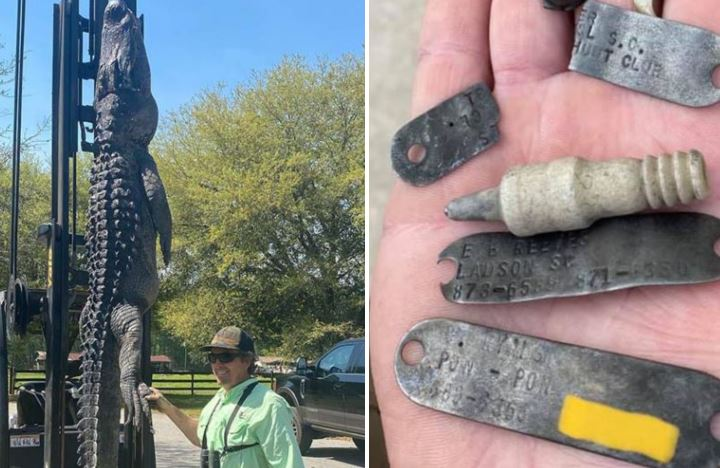 Photo of Охотник убил 3,6-метрового крокодила, разгадав загадку 24-летней давности о том, что случилось с пропавшими собаками.