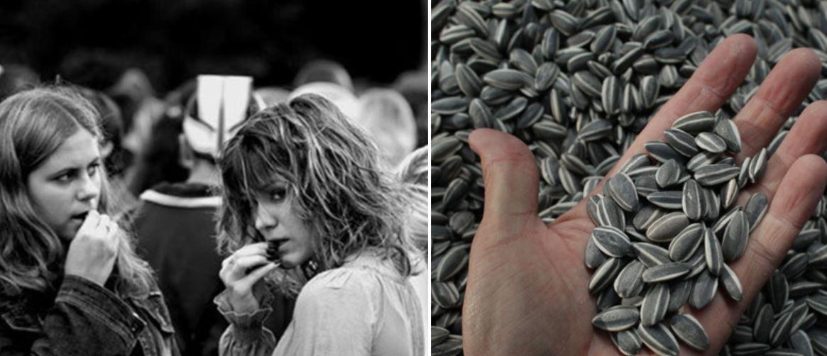 Photo of Ինչու են արեւածաղկի սերմերը վտանգավոր. 5 պատճառ