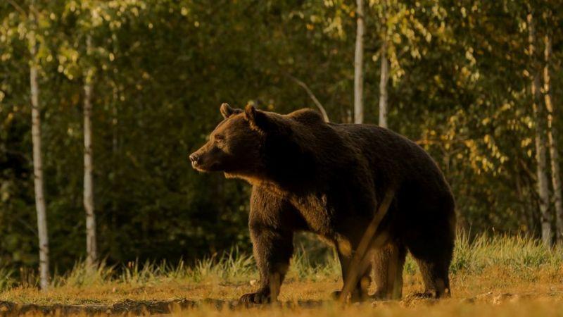 Photo of Охота на Артура. В убийстве крупнейшего медведя ЕС обвиняют принца из Лихтенштейна