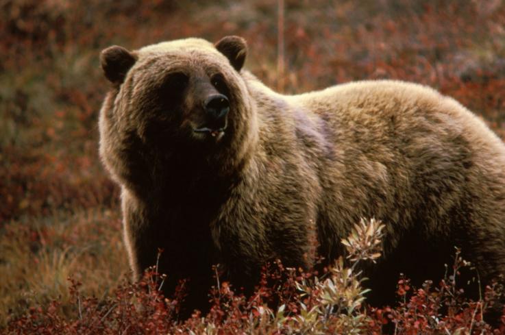 Photo of Медведь напал на 58-летнего лесника в Армении, но был застрелен. Полиция узнала подробности