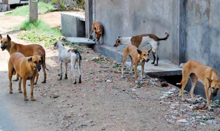 Photo of Արտակարգ դեպք՝ Արագածոտնի մարզում. թափառող շների հարձակման հետևանքով քաղաքացին հիվանդանոցում մահացել է