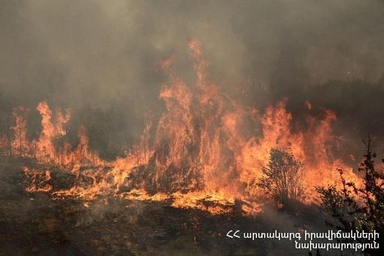 Photo of Сгорел около 110 га травяного участка