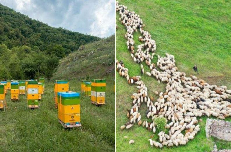 Photo of Թշնամին յուրացնում է Քարվաճառի բերրի արոտավայրերը՝ հիմնելով ֆերմերային տնտեսություններ