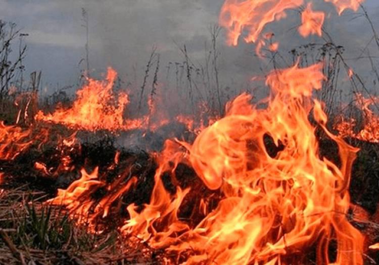 Photo of Пожар в нейтральной зоне армяно-азербайджанской границы: было установлено окарауливание пожара