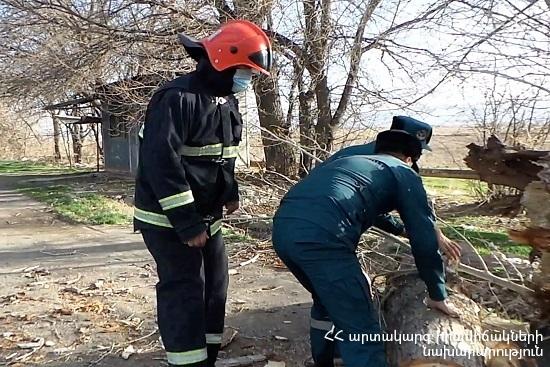 Photo of Փրկարարները մասնատել են վնասված ծառը