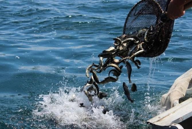 Photo of Սեպտեմբերից ավարտվում է Սևանա լճում արդյունագործական ձկնորսության որսաշրջանը