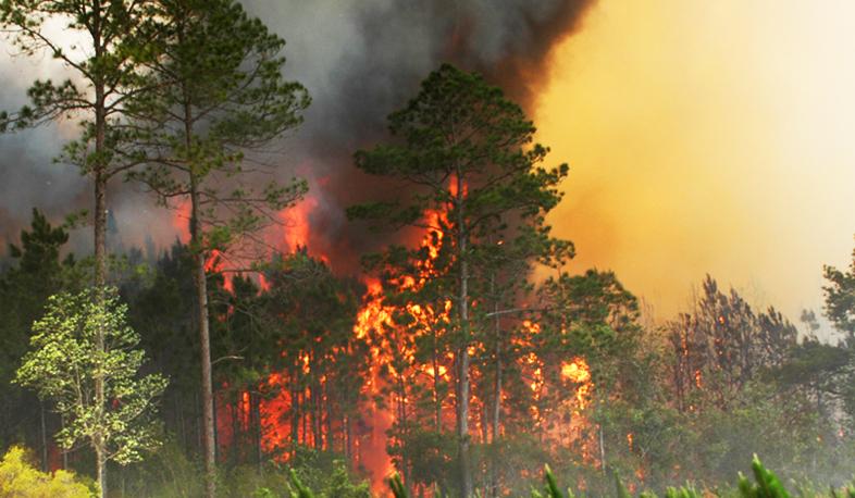 Photo of «Խոսրովի անտառ» արգելոցում վերսկսվել են հրդեհաշիջման աշխատանքները