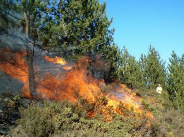 Photo of «Խոսրովի անտառ»-ի տարածքում հերթապահություն են իրականացնում 19 հրշեջ-փրկարար