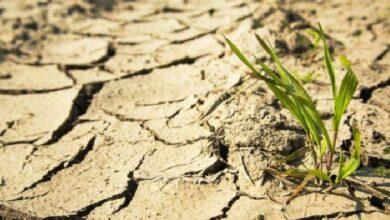 Photo of Վերջին 5 տարվա ընթացքում Շիրակի մարզում գյուղատնտեսությունն այնքան վնաս չէր կրել, որքան այս տարի
