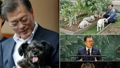 Photo of Президент Южной Кореи призвал соотечественников отказаться от собачатины