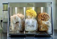 Photo of Mella Smart խելացի բիոխցիկ՝ տնային պայմաններում սունկ աճեցնելու համար