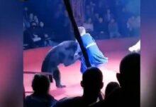Photo of В цирке в Орле медведь напал на женщину