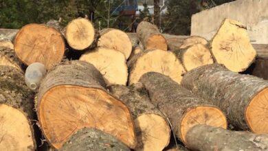 Photo of Ապօրինի հատել էր 111 հատ ծառ. ոստիկանության բացահայտումը
